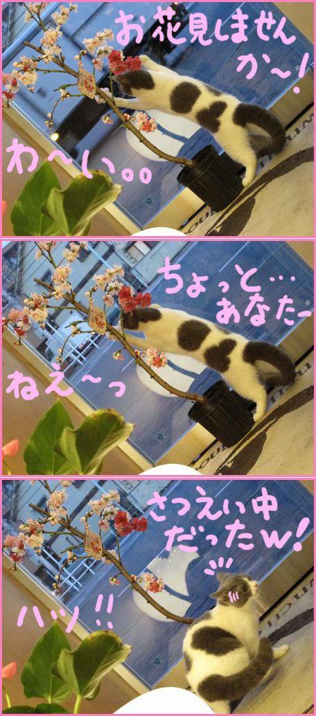 わーい。。お花見。。.jpg