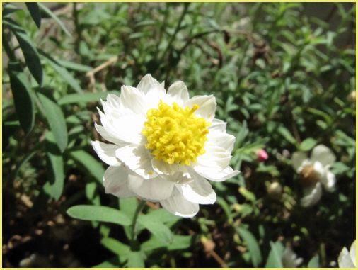 花かんざし。.jpg