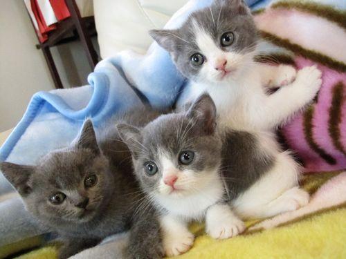 かわいい。3兄弟。。.jpg