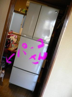 ぱー子と冷蔵庫..jpg