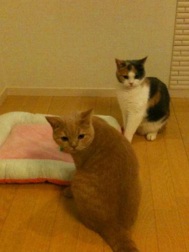 ルナ&トラ丸.jpg