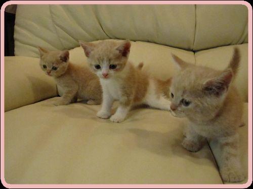3兄弟。。.jpg
